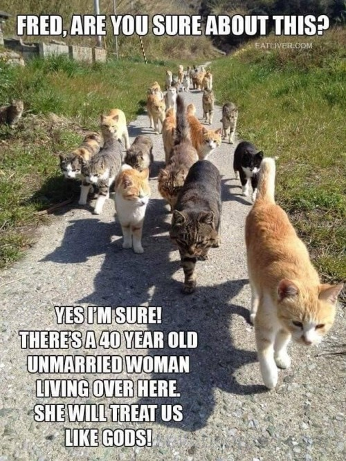 Find the Crazy Cat Lady